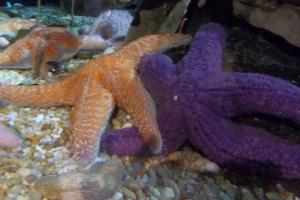 Sea Start Fish